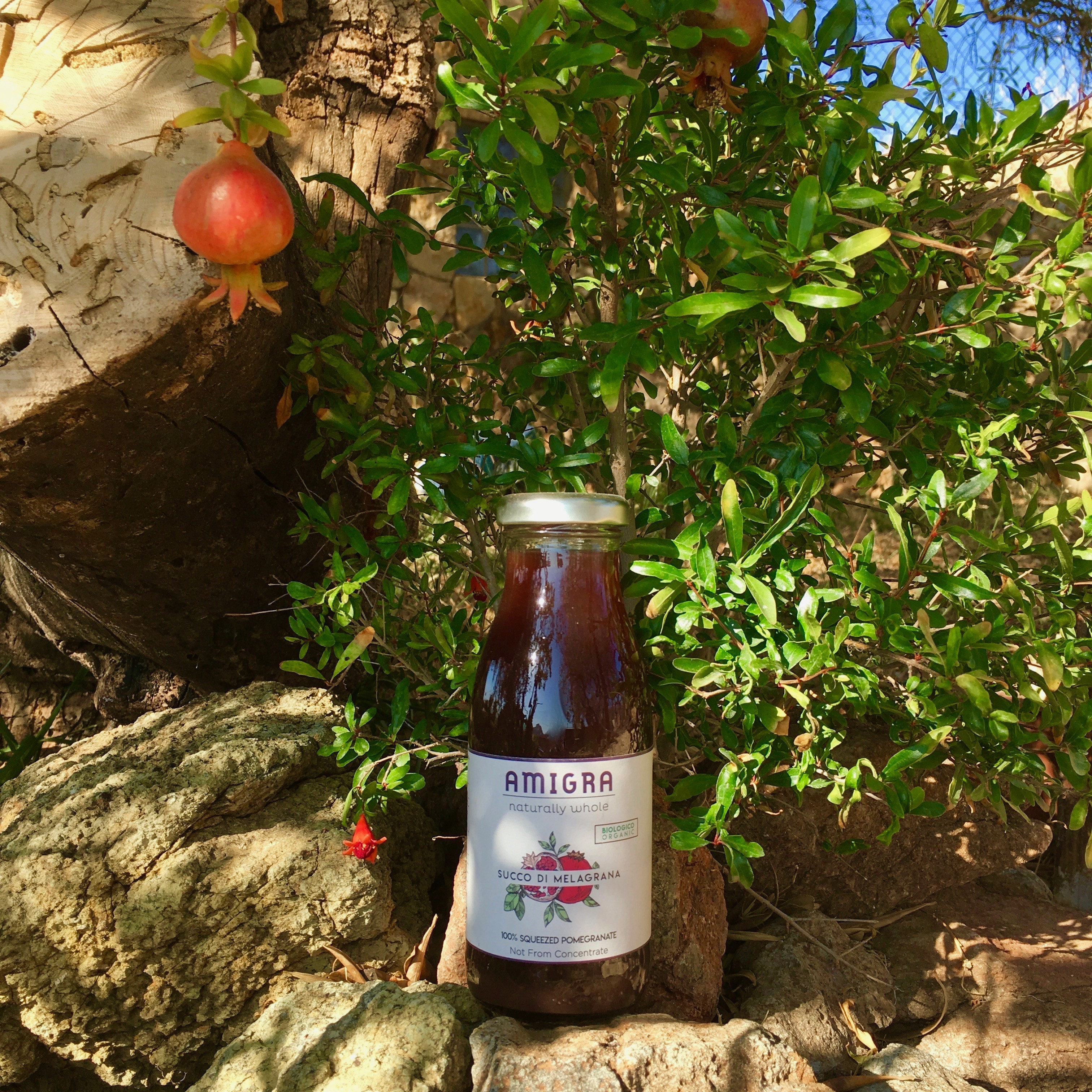 Bio pomegranate juice: discover the organic world of Amigra.